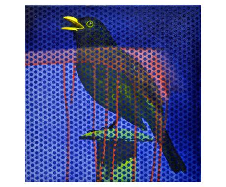 BLACKBIRD-II-X_web.jpg