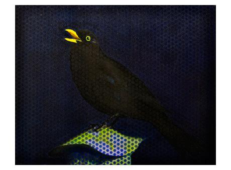 BLACKBIRD-I-X_web.jpg